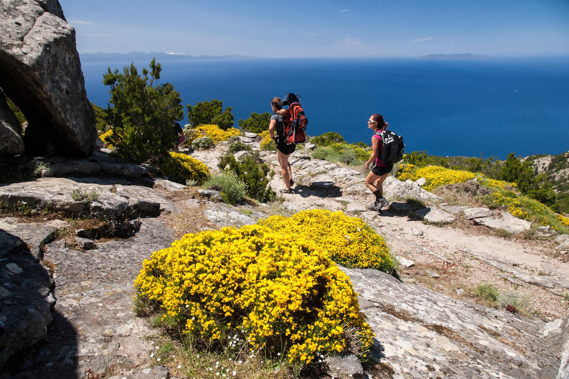 Fiori Gialli Isola Delba.Giardini Floreali Visit Elba