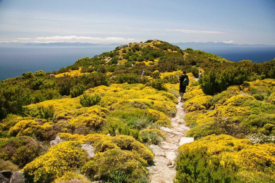Visit Elba Island Tuscany Tourism Natural Gardens
